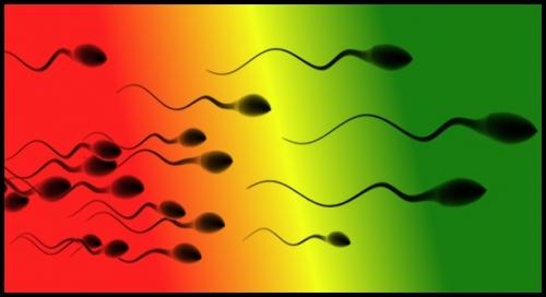 spermatozoides-604...jpg